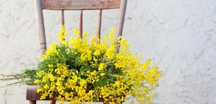 dzień kobiet we Włoszech mimoza język włoski