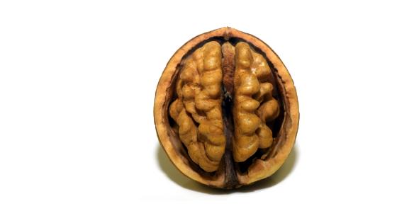 Mózg - orzech